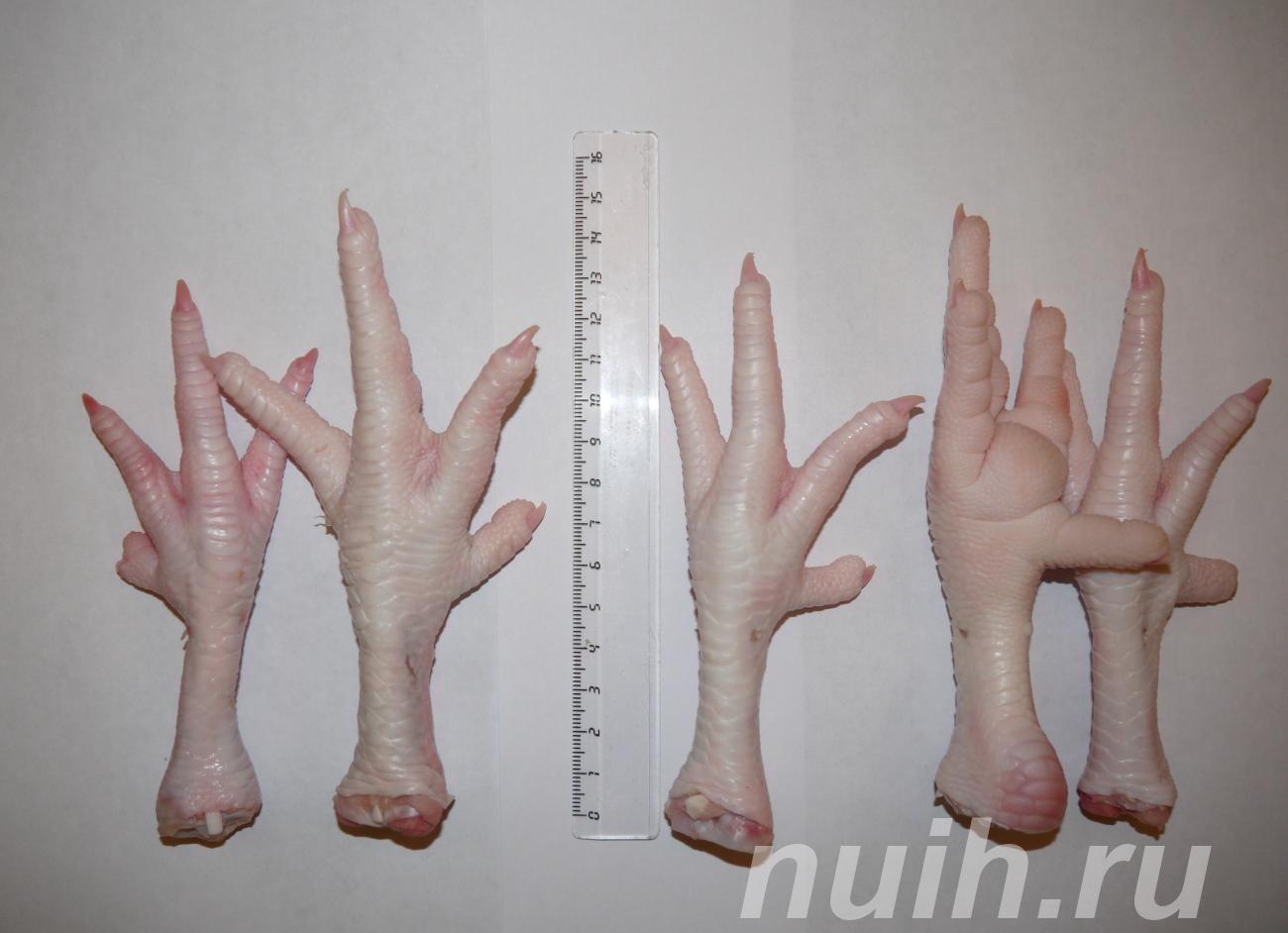 Предлагаем ноги, лапки куриные,  Челябинск