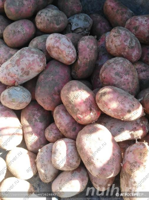 Картофель отличного качества,